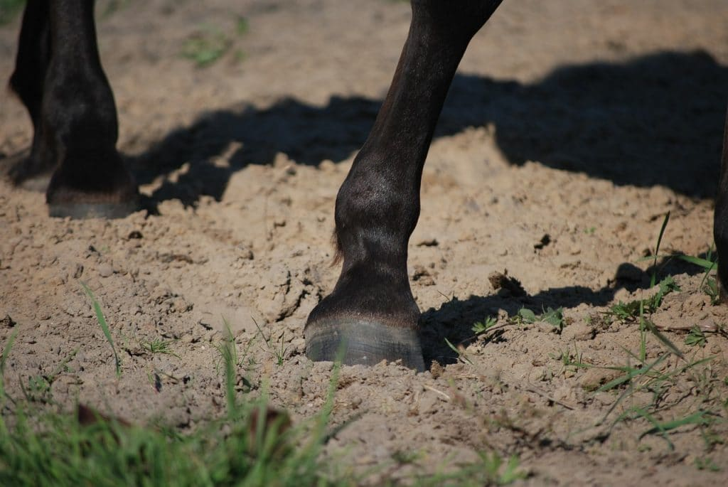 Horses leg and hoof on sandy surface