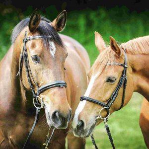 Horsewear & Equipment