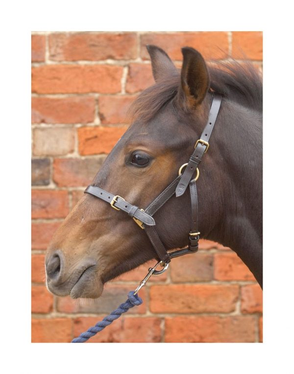 Hy Leather Foal Head Collar Hy