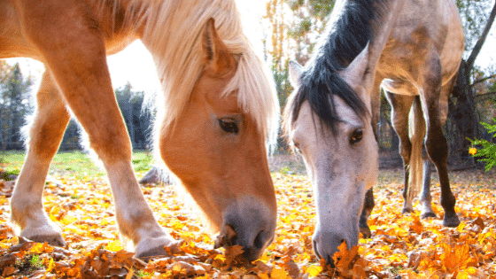 Grass nutrients, grazing & feeding - keep your horse healthy in Autumn & Winter