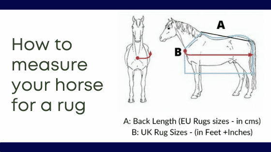 How to measure for horse rug